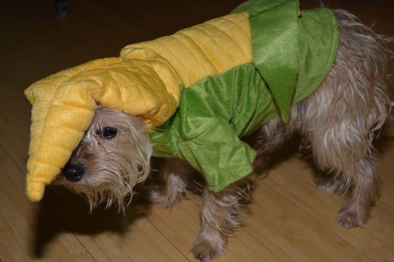 Dog corn