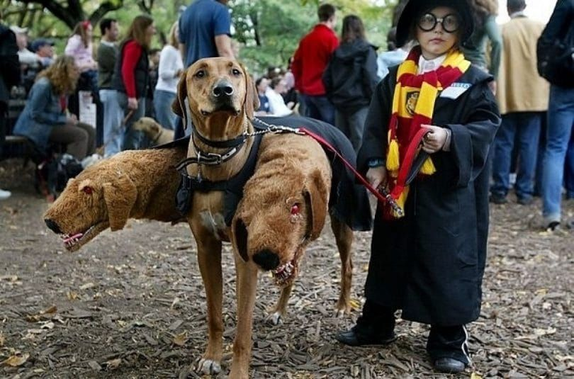 Hogwarts uniform