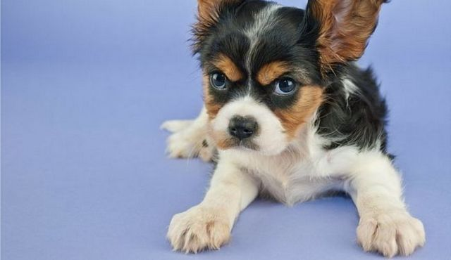 Do you have an aggressive puppy? Here are the signs