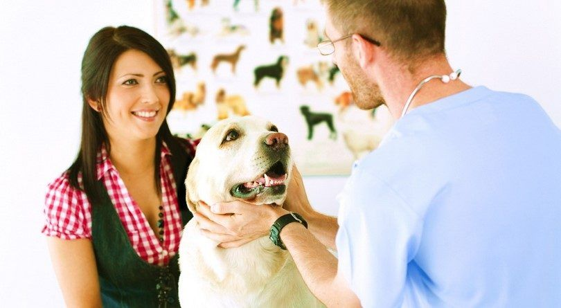Dog allergy testing: the ruff reality