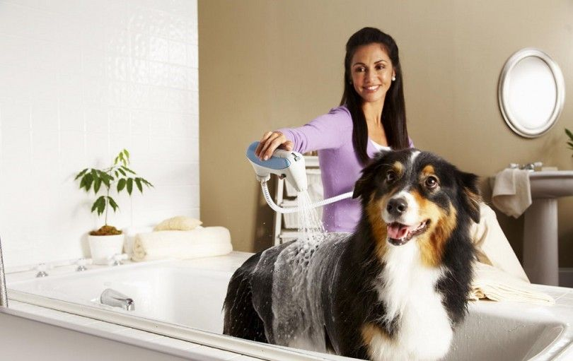 Dog allergy treatment: keep your dog happy and healthy