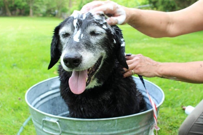 Vet`s Best Hypoallergenic Shampoo with Aloe Vera