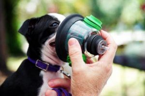 Dog asthma symptoms, treatment, and natural home remedies