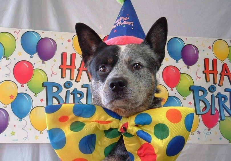 Dog birthday party ideas: a celebration for your babies