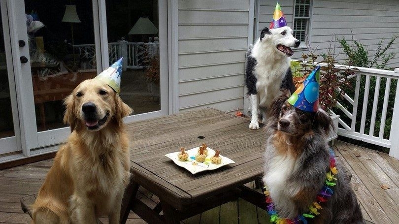 Birthday party and snacks for the dogs