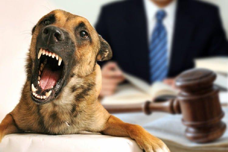 Defenses for a Dog Bite Lawsuit