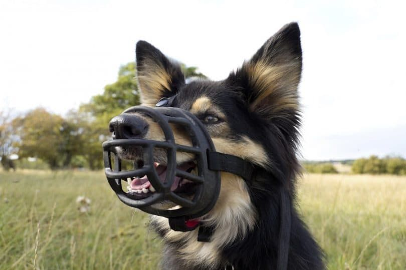 Dog must have muzzles