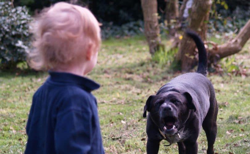 Dog bite vicitm