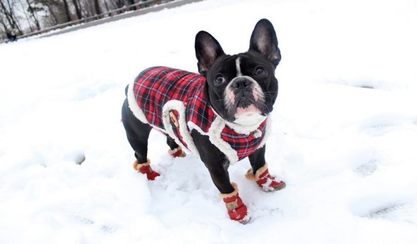 Dog booties for snow: caring for your canine's feet in the winter