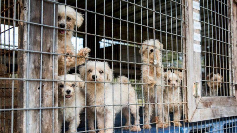 Puppies at dog mills