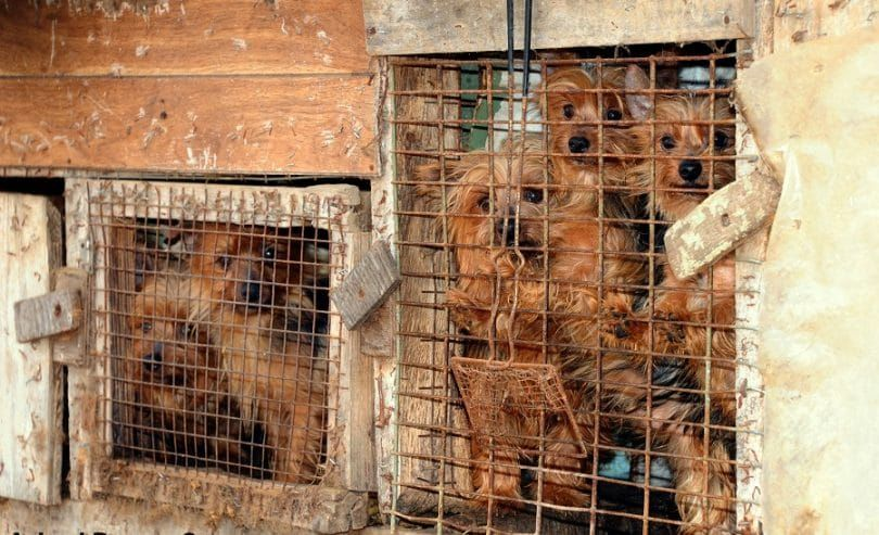Puppy Mills regulations