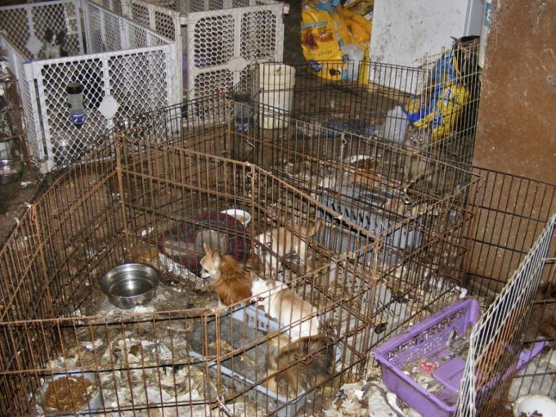 Puppy mills neglect