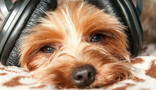 Dog calming music: does it actually work?