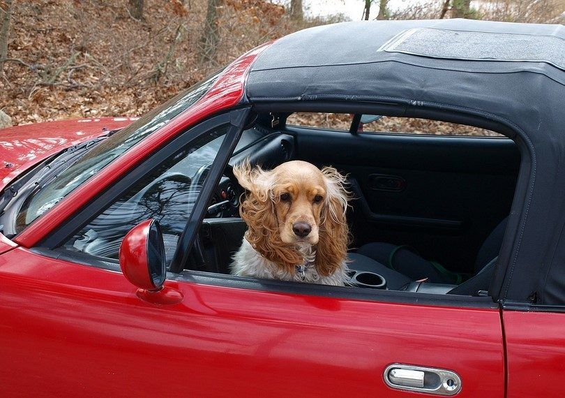 Dog car safety: enjoy the ride with your pet