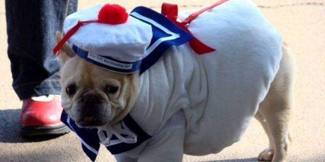 Dog costumes aren't just for halloween anymore