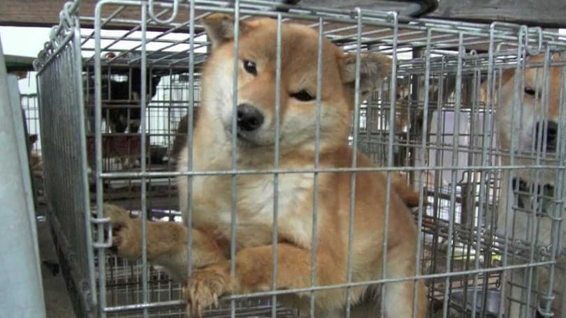 Dog cruelty by pet shops