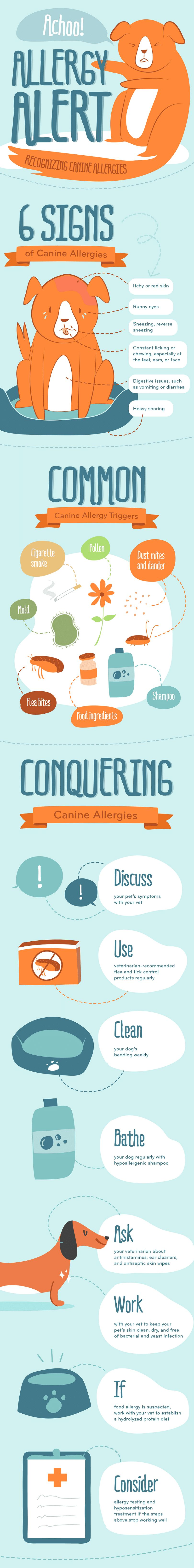 Dog allergies infographic
