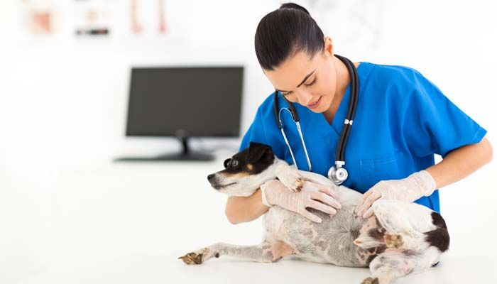 Dog eye allergy skin test