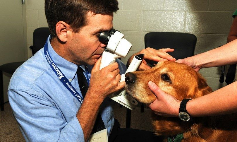 Dog eye allergies: symptoms, reasons and basic remedies