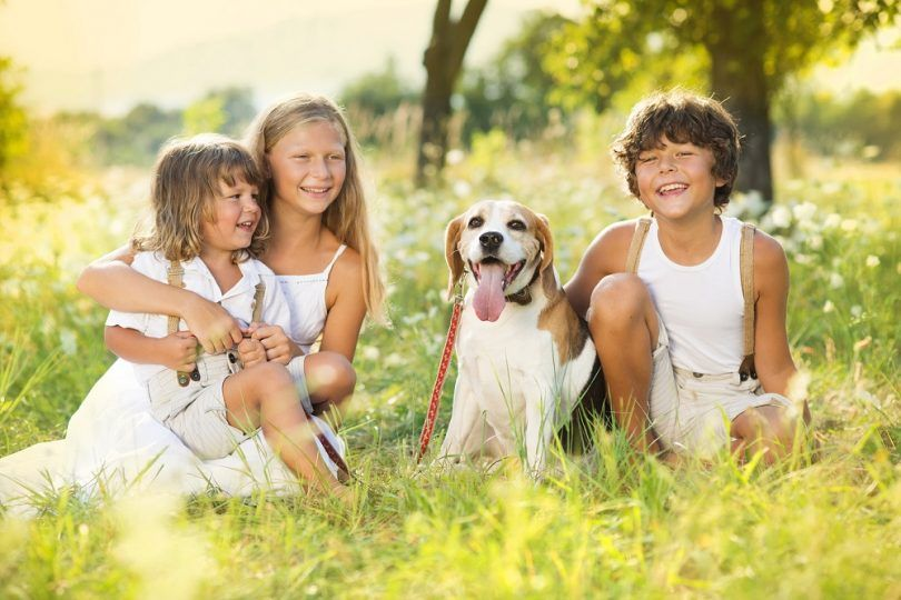 Dog facts for kids: teach the little ones to be friendly