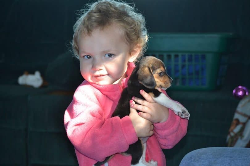 Kid holding a Beagle