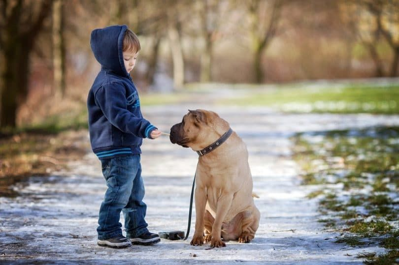Little boy with his dog in the park giving him to eat