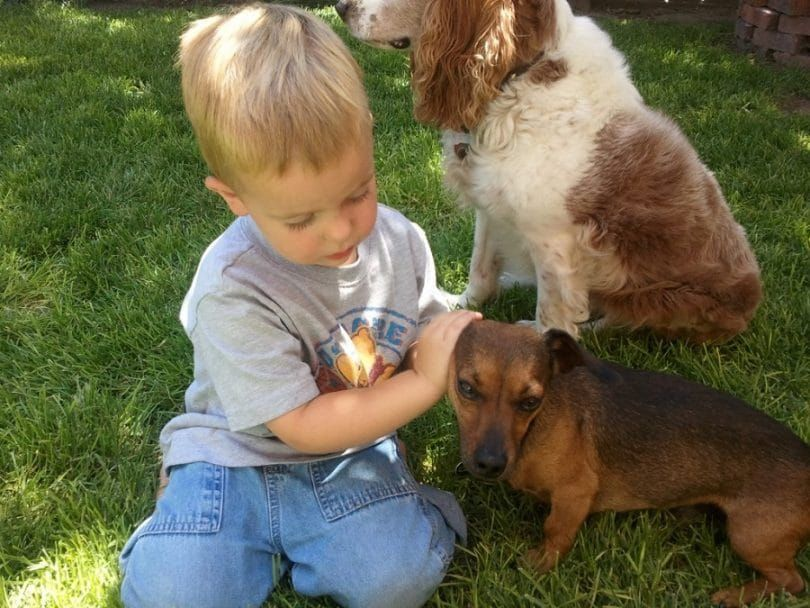 Caring for the dog