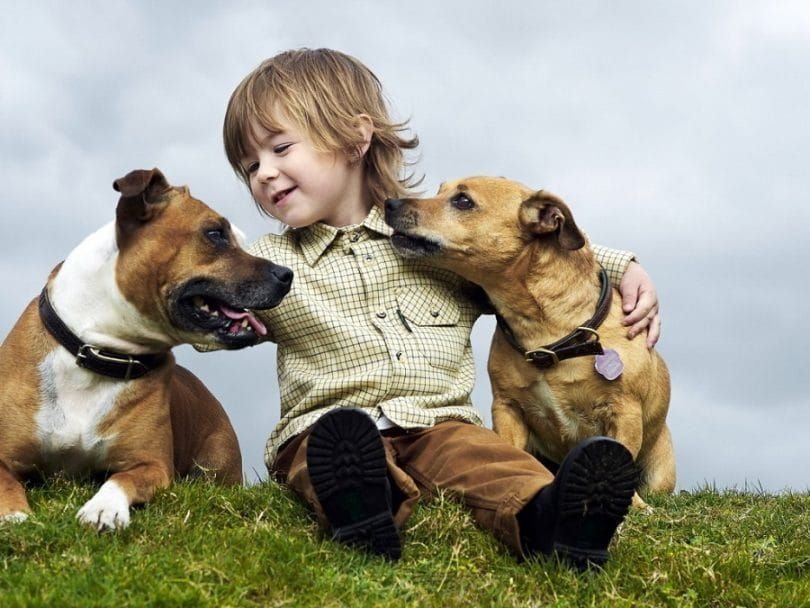 Kid and two dogs