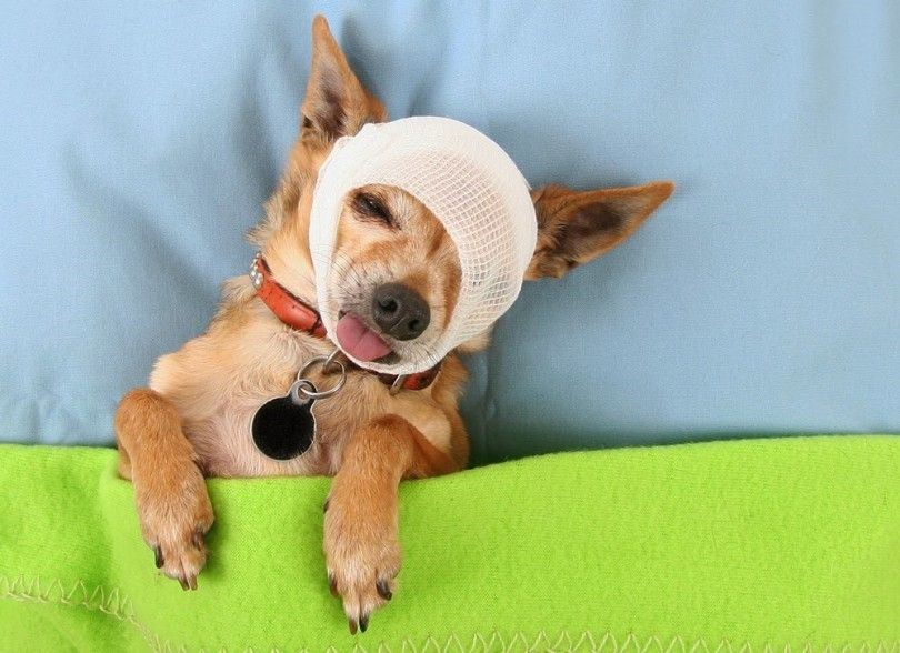 Dog first aid guide for pet owners