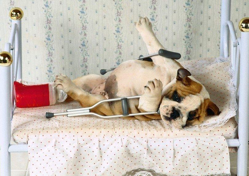 Dog resting up