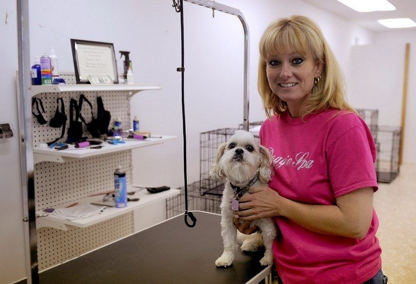 Dog grooming business: a short guide to becoming dogs favorite barber