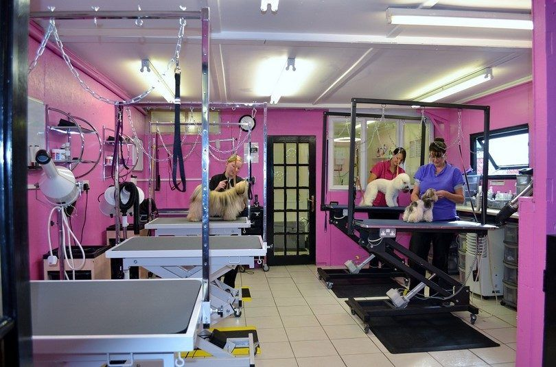 Dog grooming saloon for more dogs