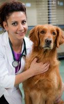 Dog heartworm: what is it and why should I prevent it?