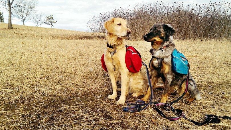 Dog hiking gear: a guide to hiking with your dog