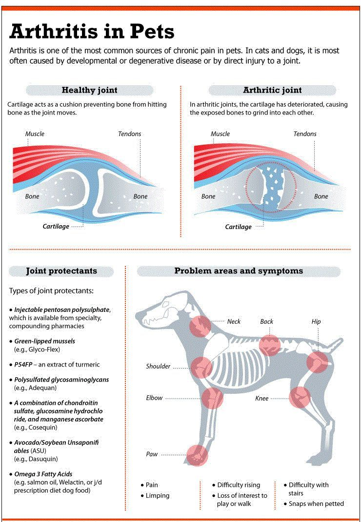 Dog hip pain: how joint problems affect man's best friend