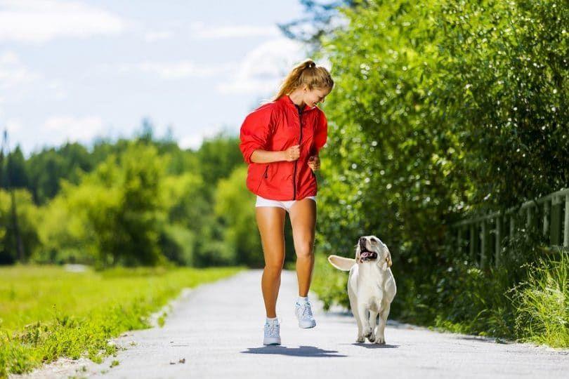 Proper exercise for dog