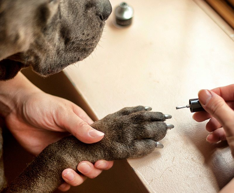 Coloring dog nails