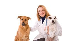 Dog neutering - an owner`s guide