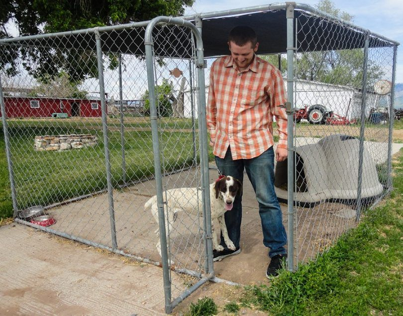 Dog pen ideas: how to build rover's perfect playing space