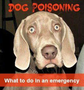 Dog poisoning 101