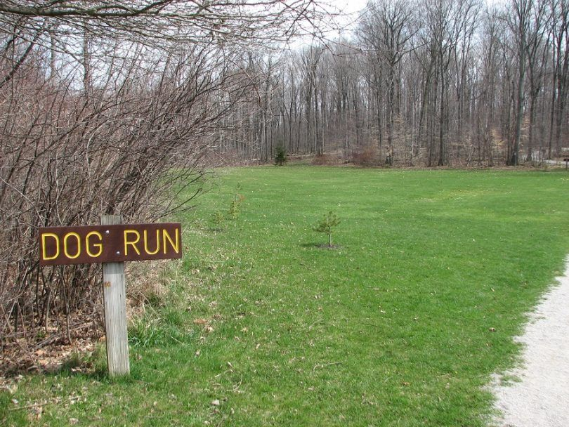 Dog run ideas: improve your dog's time while in the run