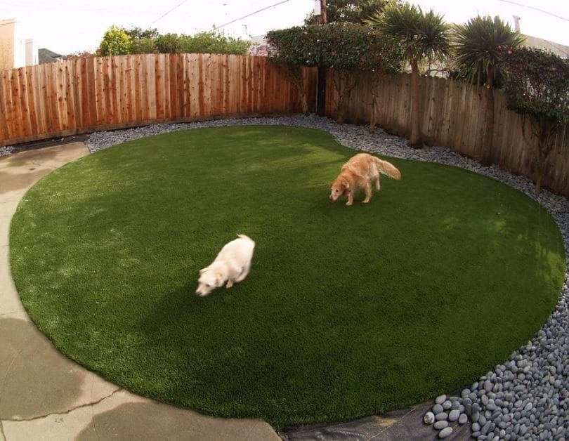 Dog run backyard