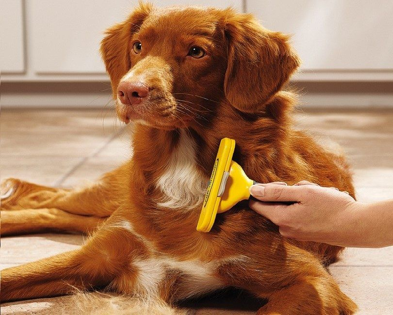 Dog shedding tool: how to keep that flying fur under control