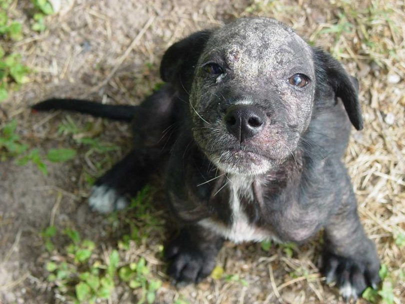 Dog skin problems: most common problems and methods of treatment