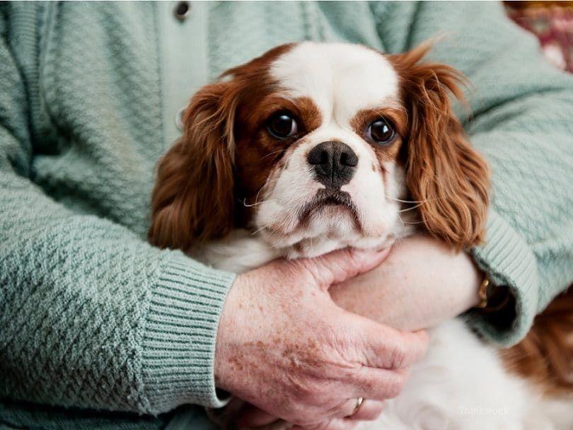 Skin neoplasms in dogs