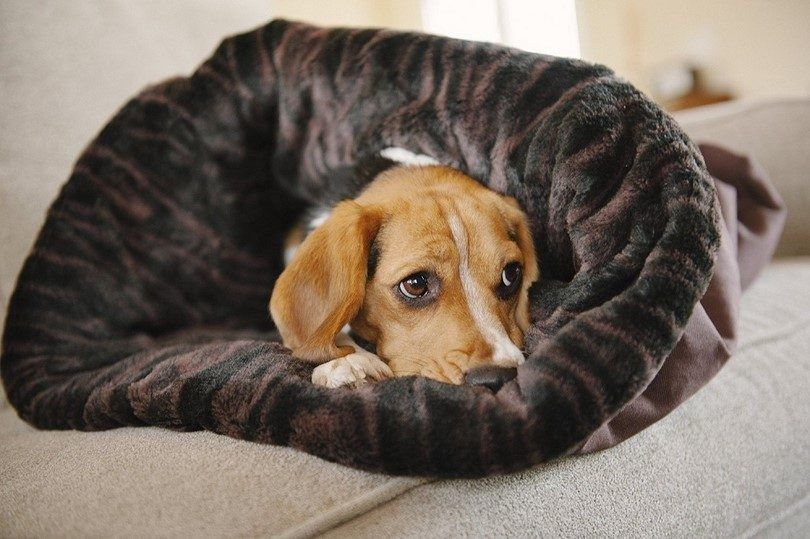 P.L.A.Y. Pet Lifestyle and You Snuggle Bed
