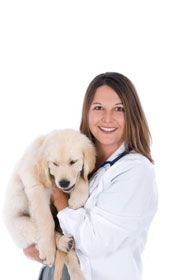 Dog spaying - an owner`s guide