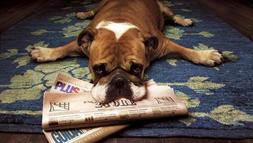Dog stress: signs that tell you buster is a nervous wreck