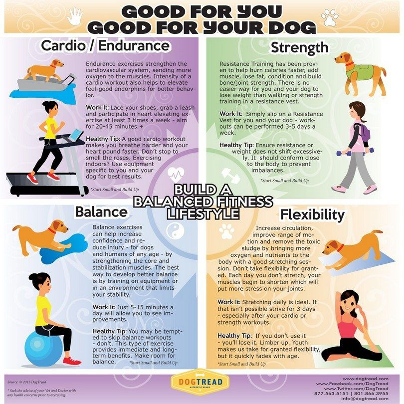 Exercise for your dog