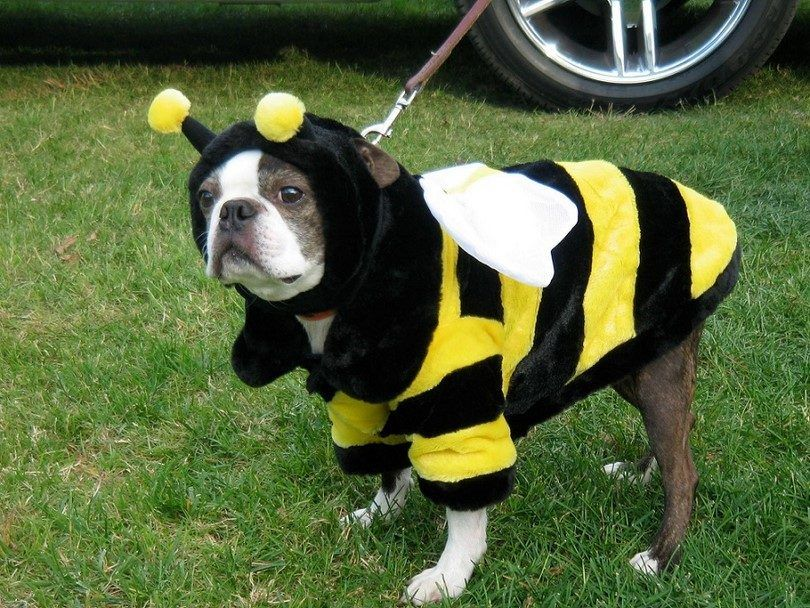 Dog stung by bee: health risks, first aid and prevention